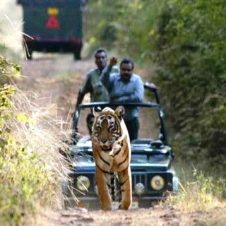 Have The Wonderful Ranthambore Tour Packages For Your Visit
