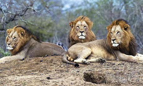 South African Tour Packages - Masai Mara Tour Packages