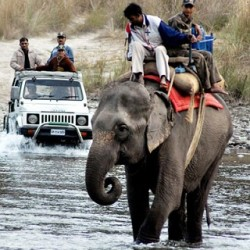 Thrilling Elephant Safari In Corbett National Park