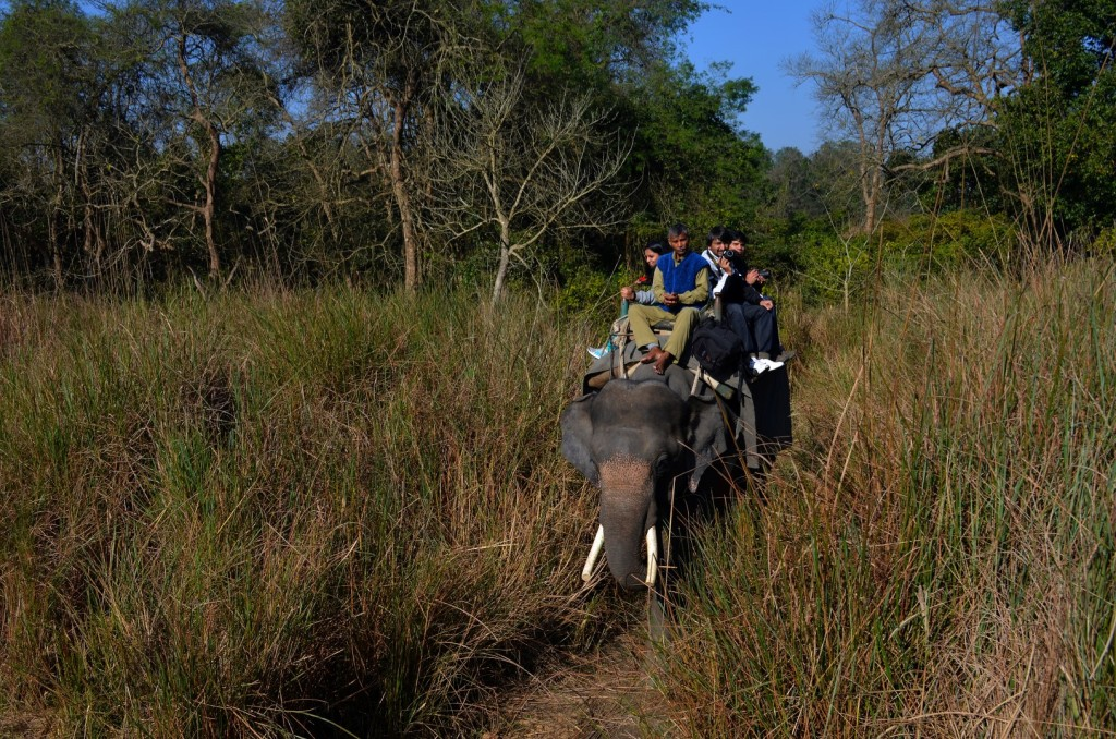 Elephant Safari - dudhwa national park india