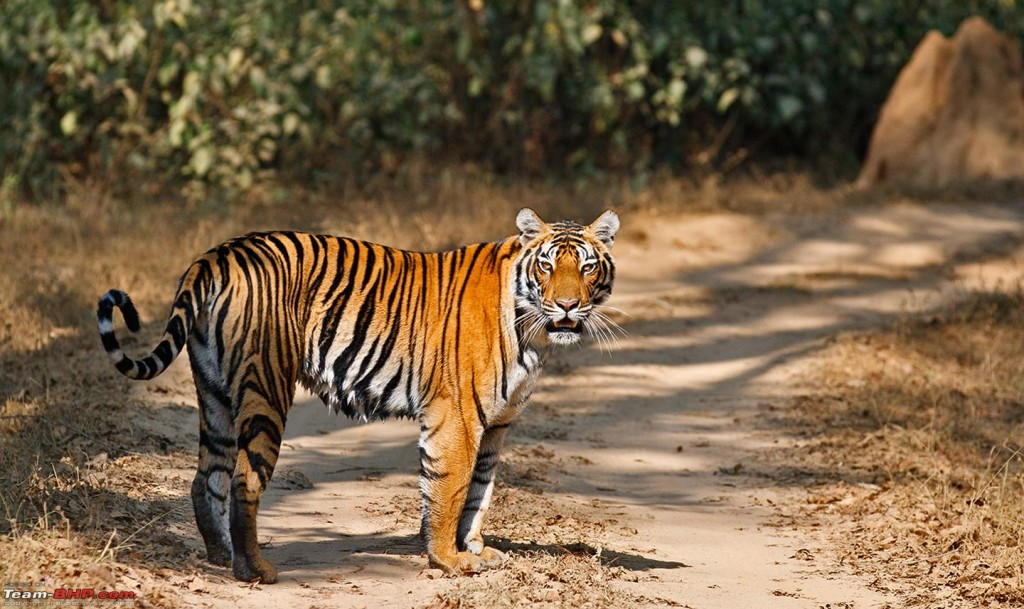 Make A Trip To Kanha National Park By Safari Online Booking