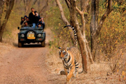 ranthambore jeep safari india