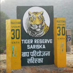 Wildlife Expedition at Sariska National Park